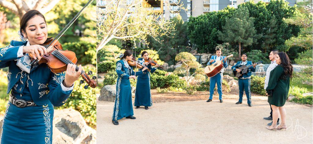 Violin serenade