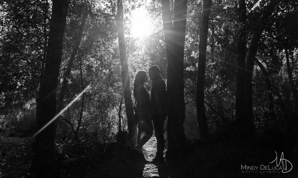 Black & White, artistic, trees, sun rays, sunlight
